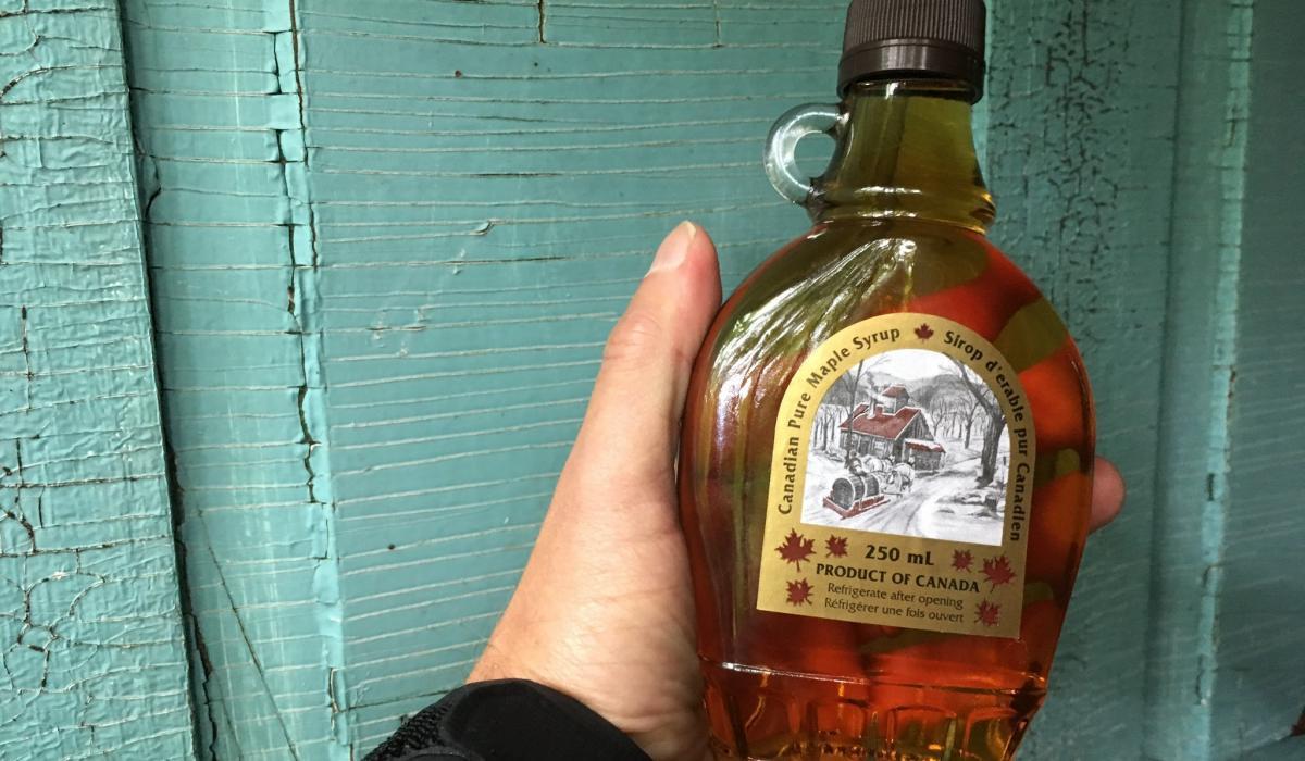maple syrup, taste testing, Haliburton Highlands. maple, Ontario