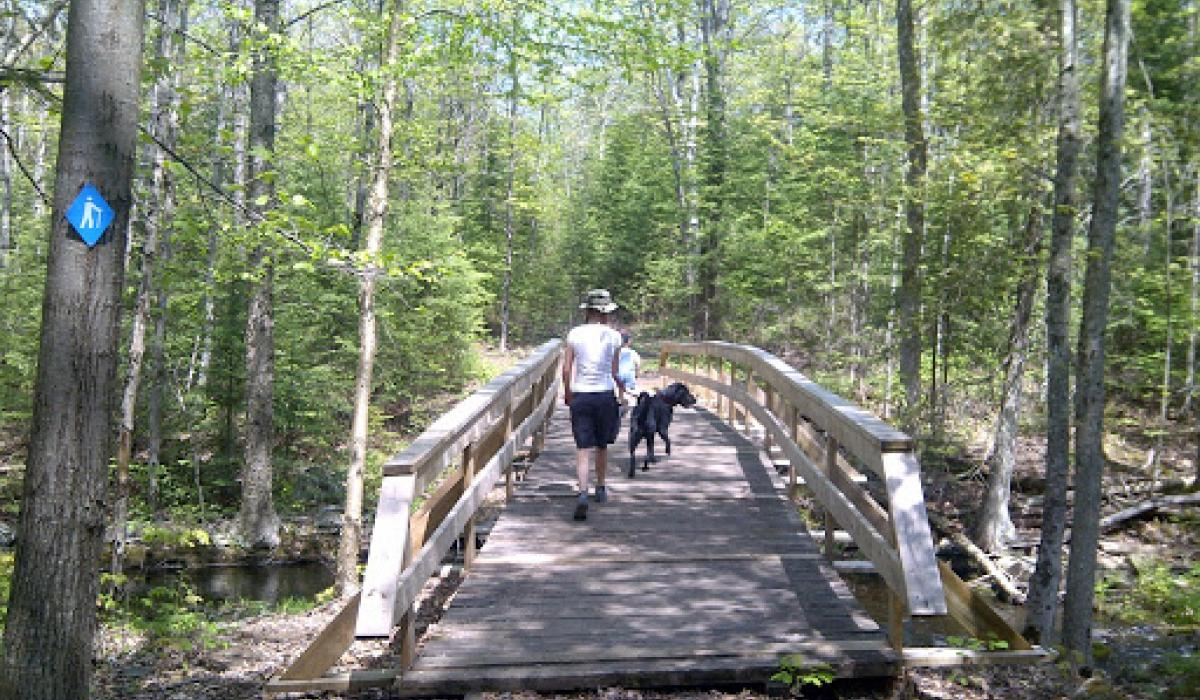High Falls Guided hike nature experience ontario