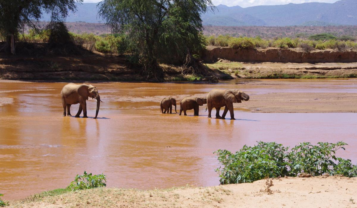 African Safari Adventure, story telling