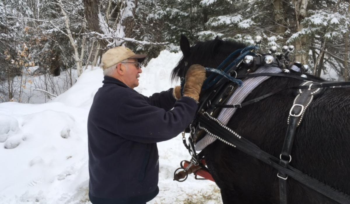snow, sleigh, horses, Haliburton, winter