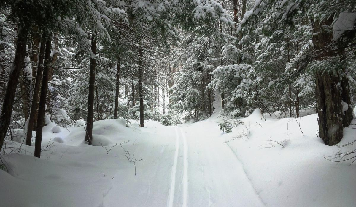 Cross country skiing in the Haliburton Highlands