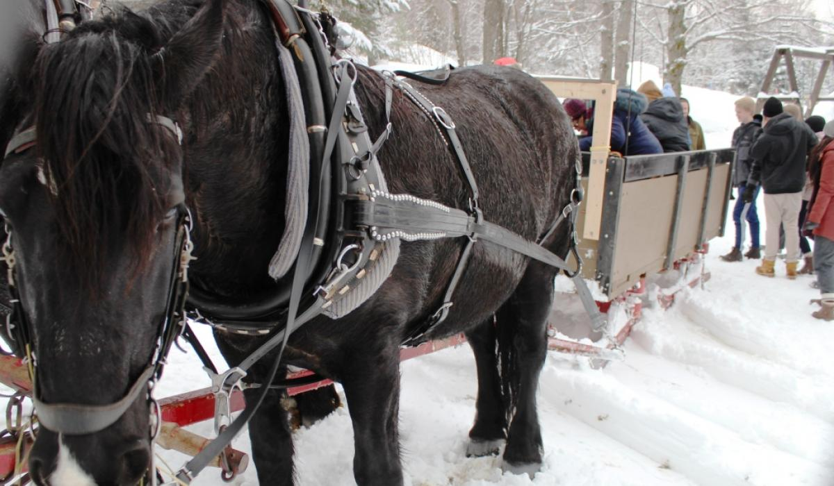 Horse drawn sleigh rides in the Haliburton Highlands, Ontario, Canada