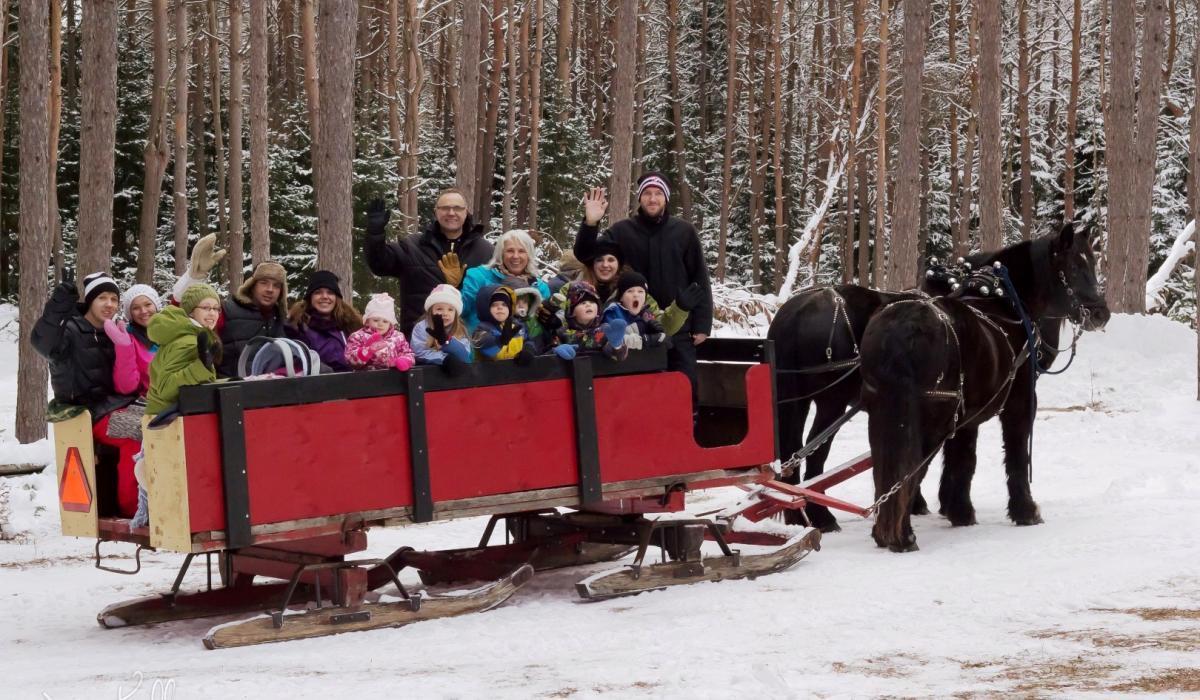 snow, sleigh, horses, Haliburton, winter