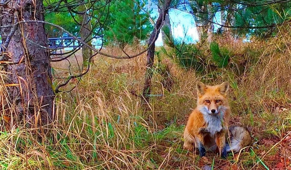 Photography in the Haliburton Highlands, Ontario , Canada