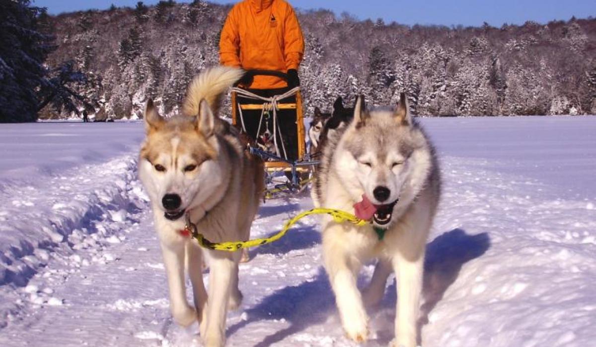 dog sledding at Haliburton Forest