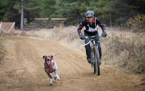 Dog, bike, outdoor adventure