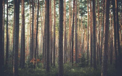 Dahl Forest