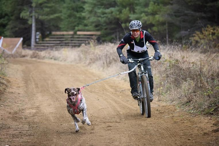 bikejoring in the Haliburton Highlands