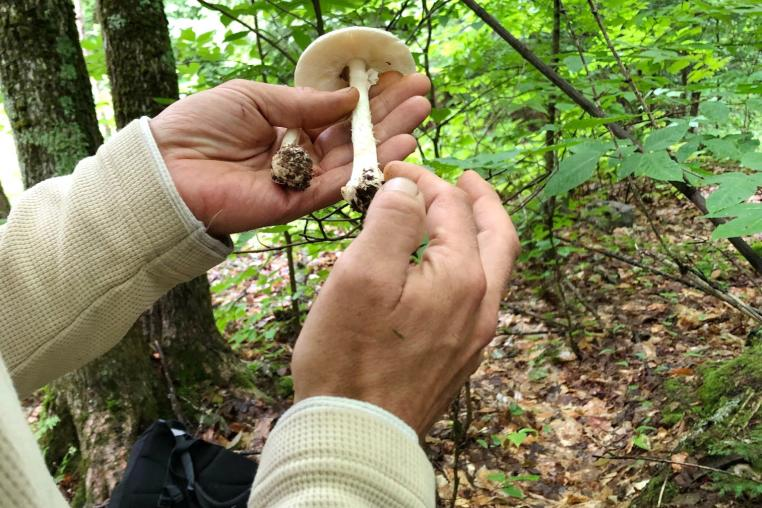 Map Of Wild Mushroom Canada Introduction to Foraging for Wild Edible Mushrooms | Yours