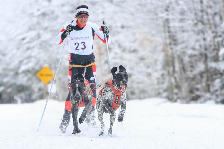 Skijoring in the Haliburton Highlands. Cross Country skiing with your dog