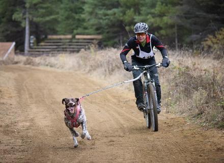 bikejoring in the Haliburton Highlands