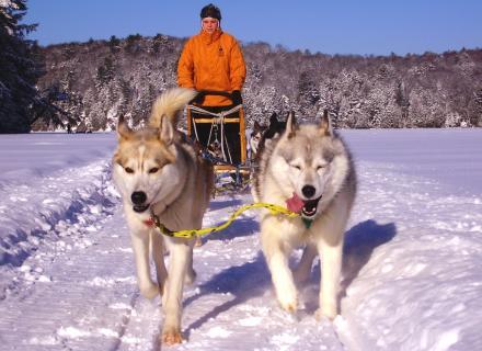 dog sledding, dogsledding, Haliburton Forest, sled dogs, mushing