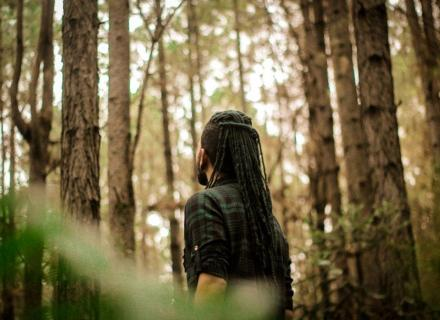 forest therapy, forest bathing, wellness